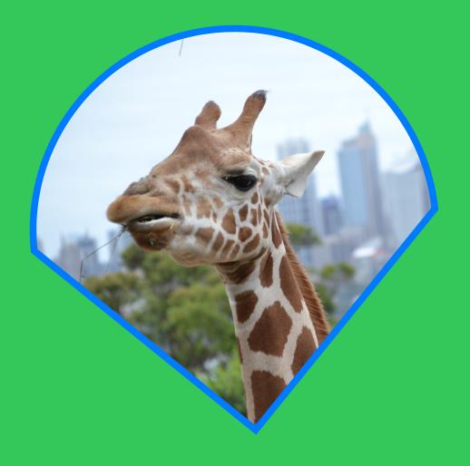 A selected giraffe